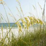 """""""Sea Grass"""" by oterodesigns"""
