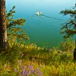 """Green Bay on Lake Pend Oreille"" by SamSherman"