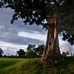 """""""Old Tree Meadow"""" by Ed-X"""