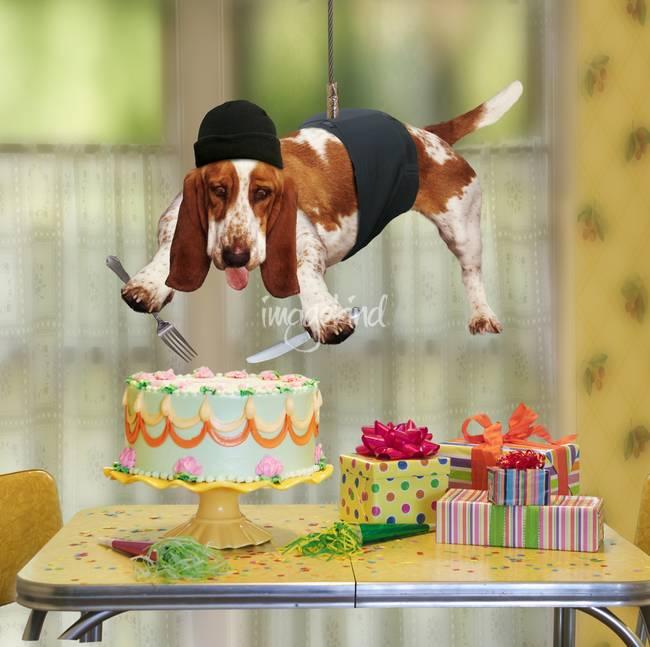 Поздравления с днём рождения фото прикол