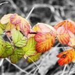 """Leaf me alone!"" by Ed-X"