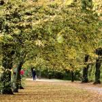 """Autumn Walk"" by Ed-X"