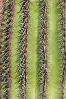 Southwest Saguaro Cactus Close-Up Vertical