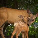 """Deer Affection"" by JannArtPhotography"