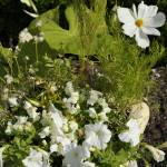 """""""white in flowerpot"""" by BethsSpecialMoments"""