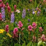 """Wild Flower Rainbow"" by JannArtPhotography"