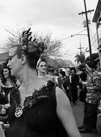 Black Swan on Mardi Gras, New Orleans