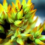 """""""Yellow Abstract"""" by tararichter"""