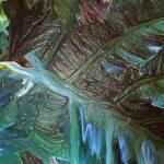 """Green Leaf"" by tararichter"