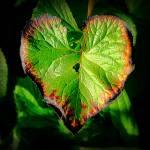 """""""Natures Valentine II"""" by paulcausie"""