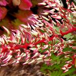 """Red Botanical Abstract"" by tararichter"
