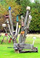 birdhouse tree