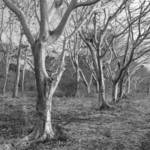 """Costa Rica Trees B+W"" by MikeandAmy"