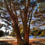 """""""HDR Winter Scene 4"""" by MikeandAmy"""