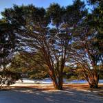 """""""HDR Winter Scene 3"""" by MikeandAmy"""