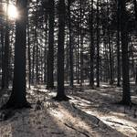 """""""B+W Forest"""" by MikeandAmy"""