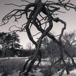 """""""B+W Sculpture 2"""" by MikeandAmy"""