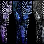 """Cool Color Zebra Trio"" by KristineJohnstonArist"