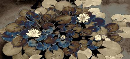 Water Lilies XX