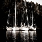 """Sailing Buddies"" by KellieOBrienEscapes"