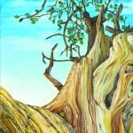 """""""Bristle Cone Pine 2"""" by AlexKube"""