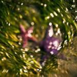 """""""Starfish Swirl"""" by singularscenes"""
