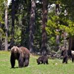 """""""Grizzly Family 399"""" by the-hole-picture"""