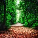 """Woodland Path"" by InspiraImage"