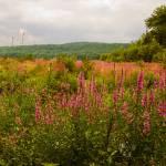"""Walking in A Westborough Meadow"" by jkphotos"
