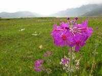 Flower in Valley