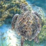 """""""Swimming Turtle"""" by CarlaKurtArt"""