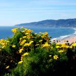 """Point Dume view"" by artfilmusic"