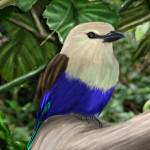 """Blue Bellied Roller"" by Chizaku"