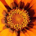 """""""Flower in garden"""" by Skyn3t"""