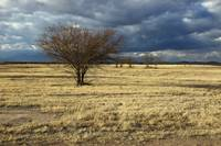 Winter Arizona Grasslands