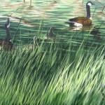 """""""Their First Swim"""" by natswildlifeart"""