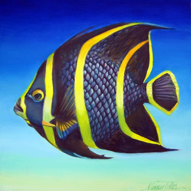 French striped angelfish by nancy tilles for Black and white striped fish freshwater