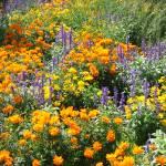 """Wildflowers"" by carolcam"