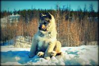 puppy on the snow 2