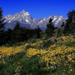 """Teton Mountain Range."" by mellow"