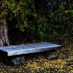 """Park Bench."" by mellow"