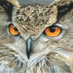 """""""Orange-Eyed Owl"""" by CarlaKurtArt"""