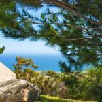 """Peek through the pine trees"" by Barjay"