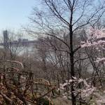 """George Washington Bridge from Fort Tryon Park"" by heather_allison"