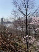 George Washington Bridge from Fort Tryon Park