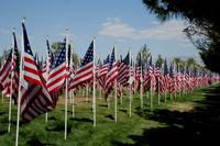American flags in the breeze