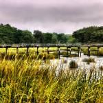 """""""Wellfleet"""" by PJPHOTO"""