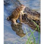 """""""frog on a log"""" by TamIshArt"""