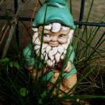 """Gnome"" by meredithsphotography"
