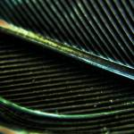 """Black Feather macro"" by InspiraImage"